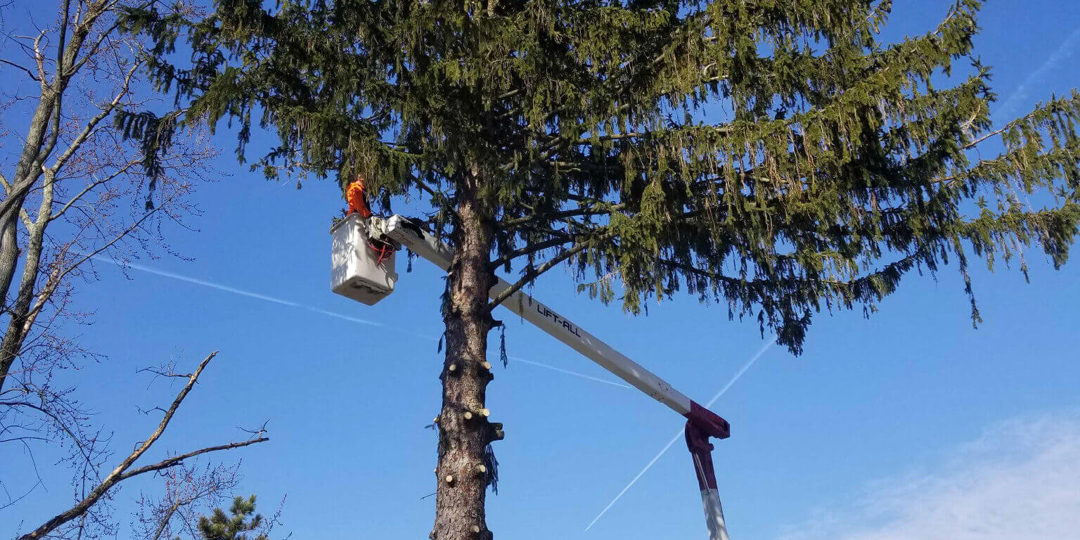 247 Tree Removal-Port St. Lucie's Best Tree Trimming and Tree Removal Services-We Offer Tree Trimming Services, Tree Removal, Tree Pruning, Tree Cutting, Residential and Commercial Tree Trimming Services, Storm Damage, Emergency Tree Removal, Land Clearing, Tree Companies, Tree Care Service, Stump Grinding, and we're the Best Tree Trimming Company Near You Guaranteed!