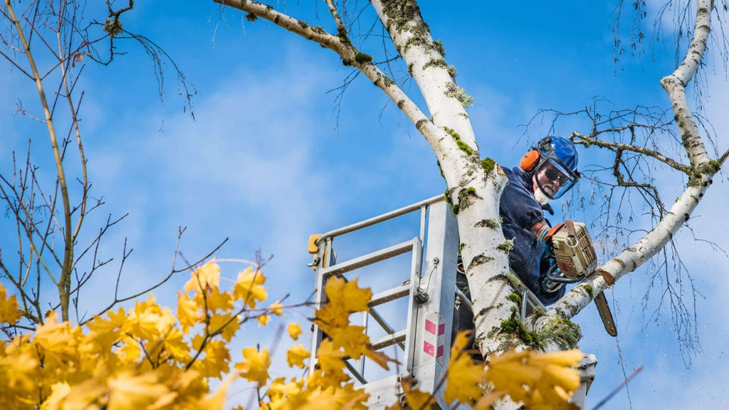 Commercial Tree Services copy-Port St. Lucie's Best Tree Trimming and Tree Removal Services-We Offer Tree Trimming Services, Tree Removal, Tree Pruning, Tree Cutting, Residential and Commercial Tree Trimming Services, Storm Damage, Emergency Tree Removal, Land Clearing, Tree Companies, Tree Care Service, Stump Grinding, and we're the Best Tree Trimming Company Near You Guaranteed!