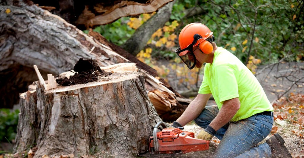 Contact Us-Port St. Lucie's Best Tree Trimming and Tree Removal Services-We Offer Tree Trimming Services, Tree Removal, Tree Pruning, Tree Cutting, Residential and Commercial Tree Trimming Services, Storm Damage, Emergency Tree Removal, Land Clearing, Tree Companies, Tree Care Service, Stump Grinding, and we're the Best Tree Trimming Company Near You Guaranteed!