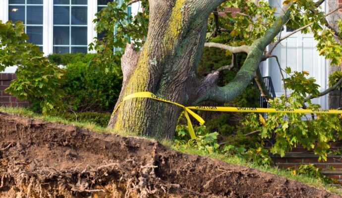 Emergency Tree Removal-Port St. Lucie's Best Tree Trimming and Tree Removal Services-We Offer Tree Trimming Services, Tree Removal, Tree Pruning, Tree Cutting, Residential and Commercial Tree Trimming Services, Storm Damage, Emergency Tree Removal, Land Clearing, Tree Companies, Tree Care Service, Stump Grinding, and we're the Best Tree Trimming Company Near You Guaranteed!