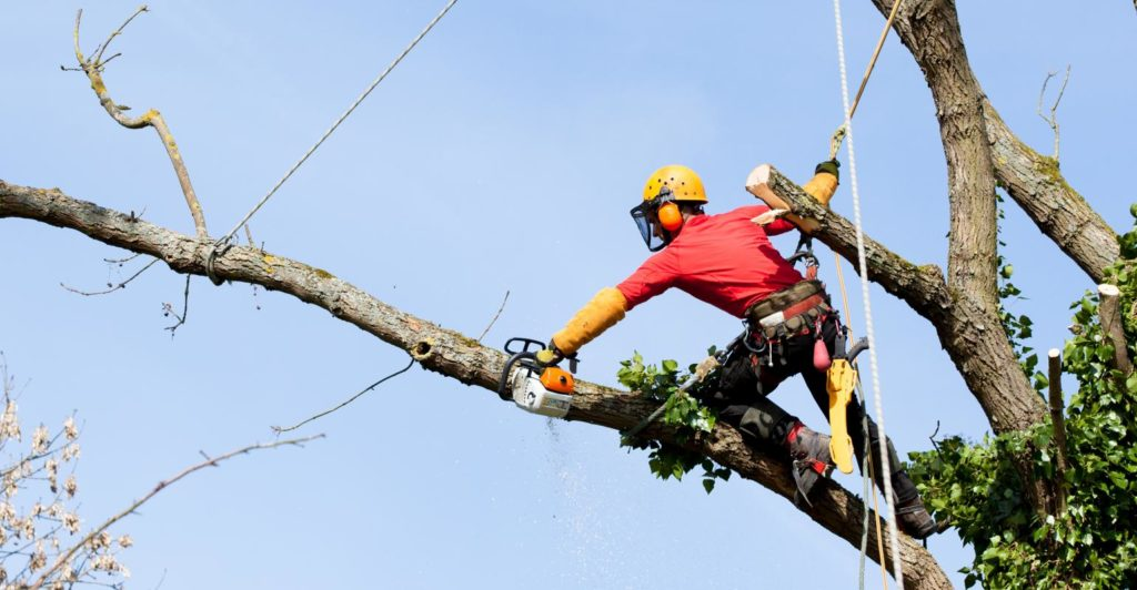 Palm City-Port St. Lucie's Best Tree Trimming and Tree Removal Services-We Offer Tree Trimming Services, Tree Removal, Tree Pruning, Tree Cutting, Residential and Commercial Tree Trimming Services, Storm Damage, Emergency Tree Removal, Land Clearing, Tree Companies, Tree Care Service, Stump Grinding, and we're the Best Tree Trimming Company Near You Guaranteed!
