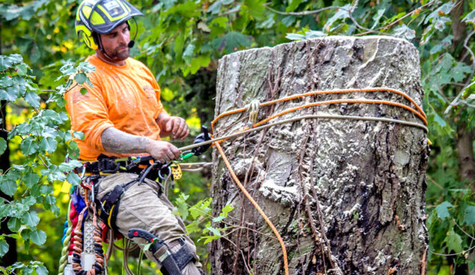 Port St. Lucie's Best Tree Trimming and Tree Removal Services-We Offer Tree Trimming Services, Tree Removal, Tree Pruning, Tree Cutting, Residential and Commercial Tree Trimming Services, Storm Damage, Emergency Tree Removal, Land Clearing, Tree Companies, Tree Care Service, Stump Grinding, and we're the Best Tree Trimming Company Near You Guaranteed!