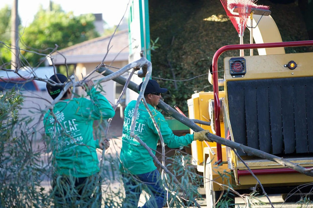Residential Tree Services copy-Port St. Lucie's Best Tree Trimming and Tree Removal Services-We Offer Tree Trimming Services, Tree Removal, Tree Pruning, Tree Cutting, Residential and Commercial Tree Trimming Services, Storm Damage, Emergency Tree Removal, Land Clearing, Tree Companies, Tree Care Service, Stump Grinding, and we're the Best Tree Trimming Company Near You Guaranteed!