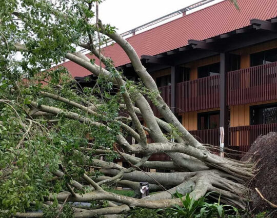 Storm Damage-Port St. Lucie's Best Tree Trimming and Tree Removal Services-We Offer Tree Trimming Services, Tree Removal, Tree Pruning, Tree Cutting, Residential and Commercial Tree Trimming Services, Storm Damage, Emergency Tree Removal, Land Clearing, Tree Companies, Tree Care Service, Stump Grinding, and we're the Best Tree Trimming Company Near You Guaranteed!