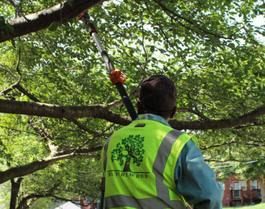 Tree Doctor-Port St. Lucie's Best Tree Trimming and Tree Removal Services-We Offer Tree Trimming Services, Tree Removal, Tree Pruning, Tree Cutting, Residential and Commercial Tree Trimming Services, Storm Damage, Emergency Tree Removal, Land Clearing, Tree Companies, Tree Care Service, Stump Grinding, and we're the Best Tree Trimming Company Near You Guaranteed!