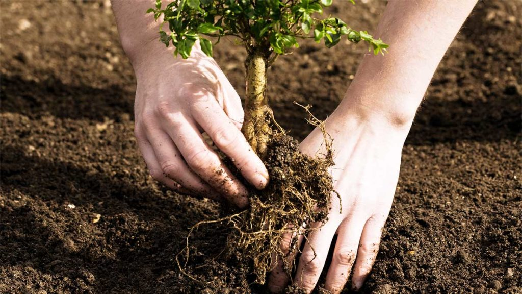 Tree Planting-Port St. Lucie's Best Tree Trimming and Tree Removal Services-We Offer Tree Trimming Services, Tree Removal, Tree Pruning, Tree Cutting, Residential and Commercial Tree Trimming Services, Storm Damage, Emergency Tree Removal, Land Clearing, Tree Companies, Tree Care Service, Stump Grinding, and we're the Best Tree Trimming Company Near You Guaranteed!