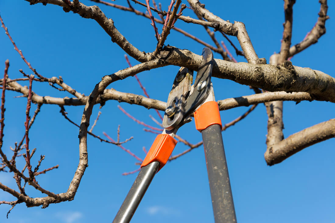Tree Pruning-Port St. Lucie's Best Tree Trimming and Tree Removal Services-We Offer Tree Trimming Services, Tree Removal, Tree Pruning, Tree Cutting, Residential and Commercial Tree Trimming Services, Storm Damage, Emergency Tree Removal, Land Clearing, Tree Companies, Tree Care Service, Stump Grinding, and we're the Best Tree Trimming Company Near You Guaranteed!