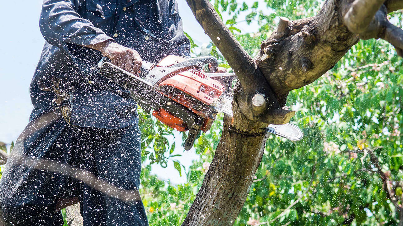 Tree Trimming copy-Port St. Lucie's Best Tree Trimming and Tree Removal Services-We Offer Tree Trimming Services, Tree Removal, Tree Pruning, Tree Cutting, Residential and Commercial Tree Trimming Services, Storm Damage, Emergency Tree Removal, Land Clearing, Tree Companies, Tree Care Service, Stump Grinding, and we're the Best Tree Trimming Company Near You Guaranteed!